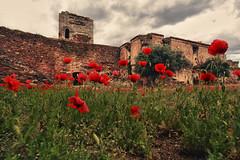 Castelo de Mourão   . papoilas (António Alfarroba) Tags: red castle ruin castelo poppies alentejo ruína mourão papoilas antónioalfarroba