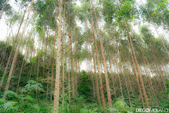 (DiegoMolano) Tags: santa wood trees tree forest de arbol madera nikon arboles rosa bosque orton cabal santarosadecabal efectoorton d3100 diegomolano