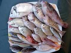 Taormina - Pescati questa mattina e pronti a saltare in padella questa sera (Luigi Strano) Tags: fish pesci sicily taormina pesca sicilia messina sicile sizilien pescare италия европа сицилия таормина