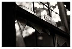 Dullemond (Strange Artifact) Tags: bw white black rural 35mm dark hotel nikon decay 18 zwart wit dx urbex toning d90 dullemond