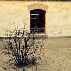 枯树与墙 (杨承燊sam) Tags: 风景 光影 摄影 色彩 手机摄影