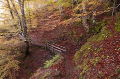 A bridge in the forest (elosoenpersona) Tags: parque autumn trees naturaleza nature colors forest spain asturias colores bosque otoño redes elosoenpersona