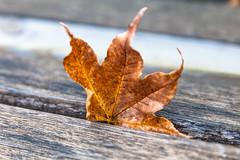 (Digital_trance) Tags: autumn fall landscape maple fallcolors taiwan autumncolors                      fushoushan 70d   14         5d2 5dii canon5dmarkii canon5dmarkiii  5d3 canon70d     5diii  2013