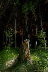 The Old Tree - LEncantada (Antonio Esteve) Tags: espaa nocturna nocturnas 2012 comunidadvalenciana laencantada beniarres beniarrs vision:text=0541 vision:outdoor=0911 vision:dark=0592 vision:plant=0553