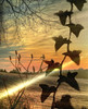 .... ivy and ray .... (xandram) Tags: field silhouette photoshop frost ivy sunray tonemapped