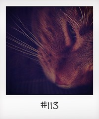 "#DailyPolaroid of 19-1-14 #113 • <a style=""font-size:0.8em;"" href=""http://www.flickr.com/photos/47939785@N05/12254610006/"" target=""_blank"">View on Flickr</a>"