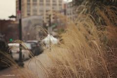 031.365   the wheat in chinatown (sidemtess   linda) Tags: city boston canon 50mm chinatown raw wheat 365 manual 50mmf14 yep 2014 60d canon60d 031365 theendofjanuary sidemtess andyouareaskingwheatinchinatown
