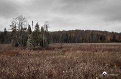 One Last Breath... (Andy_M1981) Tags: clouds landscape cottage muskoka wetland ef1740f40l 2013 canon5dmarkii eos5dmarkii wwwunendinghorizonca