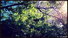 Luxembourg (Giulia_) Tags: paris france plante jardin luxembourg arbre parc printemps feuille avr14