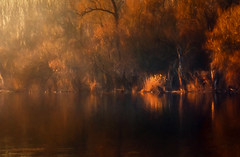 Autumn (Pásztor András) Tags: autumn trees sunset red brown lake color reflection art reed nature water yellow forest painting landscape lights mirror pond nikon hungary mood fine tranquil 1870mm andrás pásztor d5100