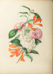 Floral Bells Botanical Folio (Madison Historical Society (CT-USA)) Tags: madisonhistoricalsociety madisonhistory mhs madison connecticut conn ct connecticutscenes country usa newengland nikon nikond600 d600 bobgundersen bostonpostroad route1 allisbushnellhouse abhouse antiques old historical history museum art poetry cmbadger book document painting flower interesting image inside indoor interior photo picture shot scene scenes clarissabadger clarissamunger clarissamungerbadger mrscmbadger flickr botanical botanicalartist prose folio botanicalillustrator womanartist flowerpaintings graceful stylized watercolor delicacy lithographicplates illustrated illustrator sketch illustration design floralbellesfromthegreenhouseandgarden floralbells