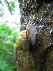 London Plane Snail (jschumacher) Tags: nyc wet snail morningsidepark