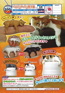 慵懶、鬆弛、脫力貓‧貓‧貓‧貓‧貓‧貓‧~