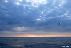 Marée basse (1) (didier95) Tags: mer ciel plage mouette picardie somme mareebasse