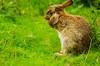 DSC_9431 Hear no evil (Julian R Rouse) Tags: summer cute rabbit nature grass mammal wildlife july naturereserve wwt droitwich uptonwarren 2013 allxpressus nikond7000 julianrouse