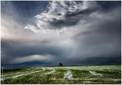 los royos I (muliterno) Tags: campos losroyos