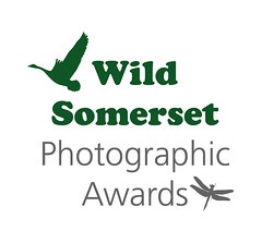 WSPA Wild Somerset Photographic Awards 2013 (Disorganised Photographer - Ian Wade - Travel, Wil) Tags: wild nature wildlife somerset photographic awards prizes wspa