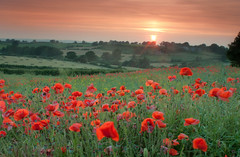 The Sun Sets On Hardstoft Poppies (Julian Barker) Tags: sunset red england cross dusk derbyshire clay poppy poppies chesterfield hardstoft