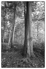 (soulshine59) Tags: trees blackandwhite landscape canon5d niksoftware artisticlandscape photoshopelements9