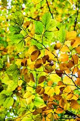 IMG_1140 (moutoons) Tags: fruit jaune automne rouge eau couleurs rivière pont porte nuage gorges tarn marron cascade arbre château champignon brume verte pomme croix feuille poire légume quézac lozère cévennes coing ispagnac