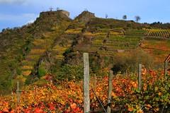 Ahrtal, Ahr Valley, vineyards (Eifeelgood) Tags: autumn fall vineyard indiansummer eifeelgood