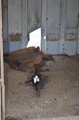 Vlieland - Vliehors - direct hit Laser Guided Training Round (Dirk Bruin) Tags: waddenzee training vlieland hit cornfield aircraft round target laser bomb dummy wad range direct nato unit guided koninklijke volkel gunnery doel luchtmacht militair klu vliehors paveway oefenterrein lgtr zeecontainer detachement zuidkant bdu33 oefenbom vliehorsrange