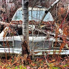 upload (collations) Tags: ontario abandoned square squareformat autos derelict automobiles rockwood junkyards wreckers autowreckers thinkinginsidethebox allsquaredup iphoneography autograveyards mcleansautowreckers instagramapp uploaded:by=instagram carcemeteries