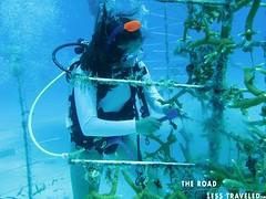 Florida Keys: Conservation is the Key (The Road Less Traveled Photos) Tags: snorkel adventure everglades marinebiology communityservice floridakeys seakayaking swimwithdolphins padiscubadiving seaturtlerescue coralrestoration coralrestorationfoundation underwaterservice