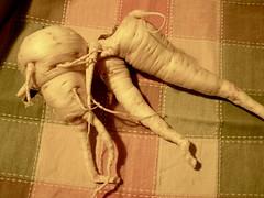 Parsnips (Melinda ....) Tags: nc sweet traditional vegetable organic zeke leggy madisoncounty 2013 parnips