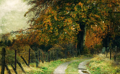 a cold wind was blowing (silviaON) Tags: trees fence germany landscape december path eifel ie textured 2013 memoriesbook skeletalmess oracope magicunicornverybest magicunicornmasterpiece
