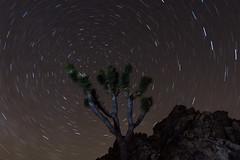 untitled-16.jpg (Steven Shinn) Tags: lightpainting night joshuatree startrails d7100 tokina1116f28