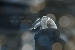 ... (Love me tender .**..*) Tags: life winter blur greek photography fishing hands december dof bokeh greece dimitra 2013 palaiofaliro marinafloisvou mygearandme mygearandmepremium nikond3100 flickrstruereflection1 kirgiannaki