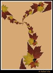 Leaves Spirals +Droste (Rafael Vila) Tags: leaves photoshop gimp effect droste mathmap