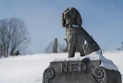 Burlington trip, January 2014 (damonbla) Tags: winter dog green cemetery statue vermont mount montpelier