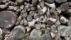 Emborrak (Tolosa) (Amaia eta Gotzon) Tags: wood log madera tronco firewood maderos troncos leña egurra emborrak