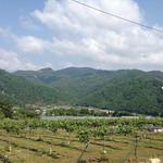 ぶどう屋 空市果樹園風景