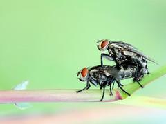 (Donald Jusa) Tags: macro closeup indonesia nikon arthropoda entomology macrophotography insecta nikonflickraward