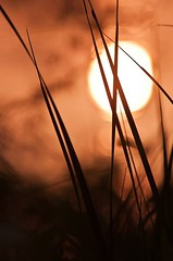 Abstract (Pranay Soni) Tags: light sun abstract love nature photography nikon frame wonders discover nikond90