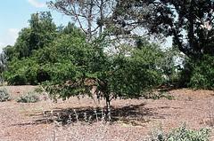01750021-84 (jjldickinson) Tags: olympusom1 fujicolorsuperiaxtra400 roll495o2 tokinasd35200mmf456 tiffen62mmsky1a longviewpoint willowspringspark sky tree longbeach