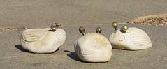 rocks with eyes (spelio) Tags: playground design good may australia arboretum national childrens canberra act gumnut 2014 australiancapitalterritory 2013 arbortum