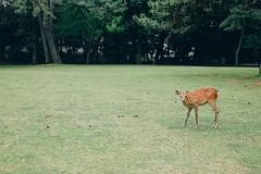 Look -  NARA PARK  (W!nG 7) Tags: park japan bokeh 14 snapshot rest ja nara portra vc flim 160   preset fujiflim  skodak xt1 vsco 35mm14r