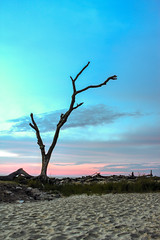 Driftwood #7 (brian29841) Tags: ocean trees cloud color tree water clouds sunrise georgia landscape island sand rocks driftwood hdr jekyll