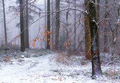 Winter Wood (jactoll) Tags: broadway worcestershire cotswolds winter snow snowy woods woodland trees mist misty landscape appicoftheweek sony a7ii zeiss 70200mmf4 jactoll