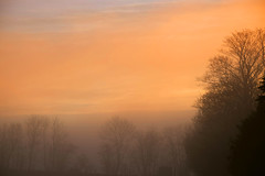 hazy morning (vibeke2620) Tags: hazy morning fog foggy tåget tåge diset morgen march marts nikon d3300 trees nature outdoor countryside pålandet danmark sunrise solopgang denmark orange sky himmel skyet dew misty dug