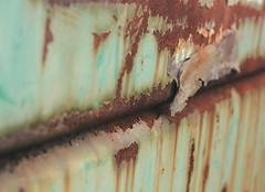 rust (annapolis_rose) Tags: rust rusty dumpster