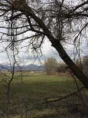 IMG_0597 (augiebenjamin) Tags: lakeviewparkway lakeshoredrive provo utah mountains provorivertrail trees spring winter spanishfork nebo bicentennialpark oremcity provocity utahvalley utahcounty oremarboretum