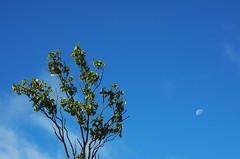 Moonlight (Anaïs Lecointre) Tags: arbre tree moon moonlight lune clairdelune canada quebec gaspesie travel road roadtrip travelphotography photography color nikon nikond5100 nikondx