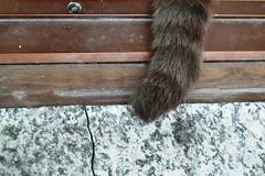 72 (fedesulsole) Tags: cats cat leo gatto gatti coda balcone tigrato