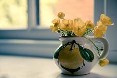 24th May - Dog walk treasure (Bond Girly) Tags: flower window yellow weed cheery treasure buttercup ledge jug