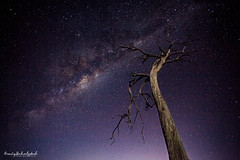 Dancing In The Moonlight (Craig Schulstad) Tags: old longexposure tree night canon stars astro galaxy astrophotography bathurst milkyway 1740l 5dmkii